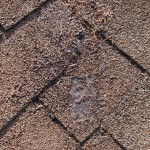 Worn out composition roof shingles