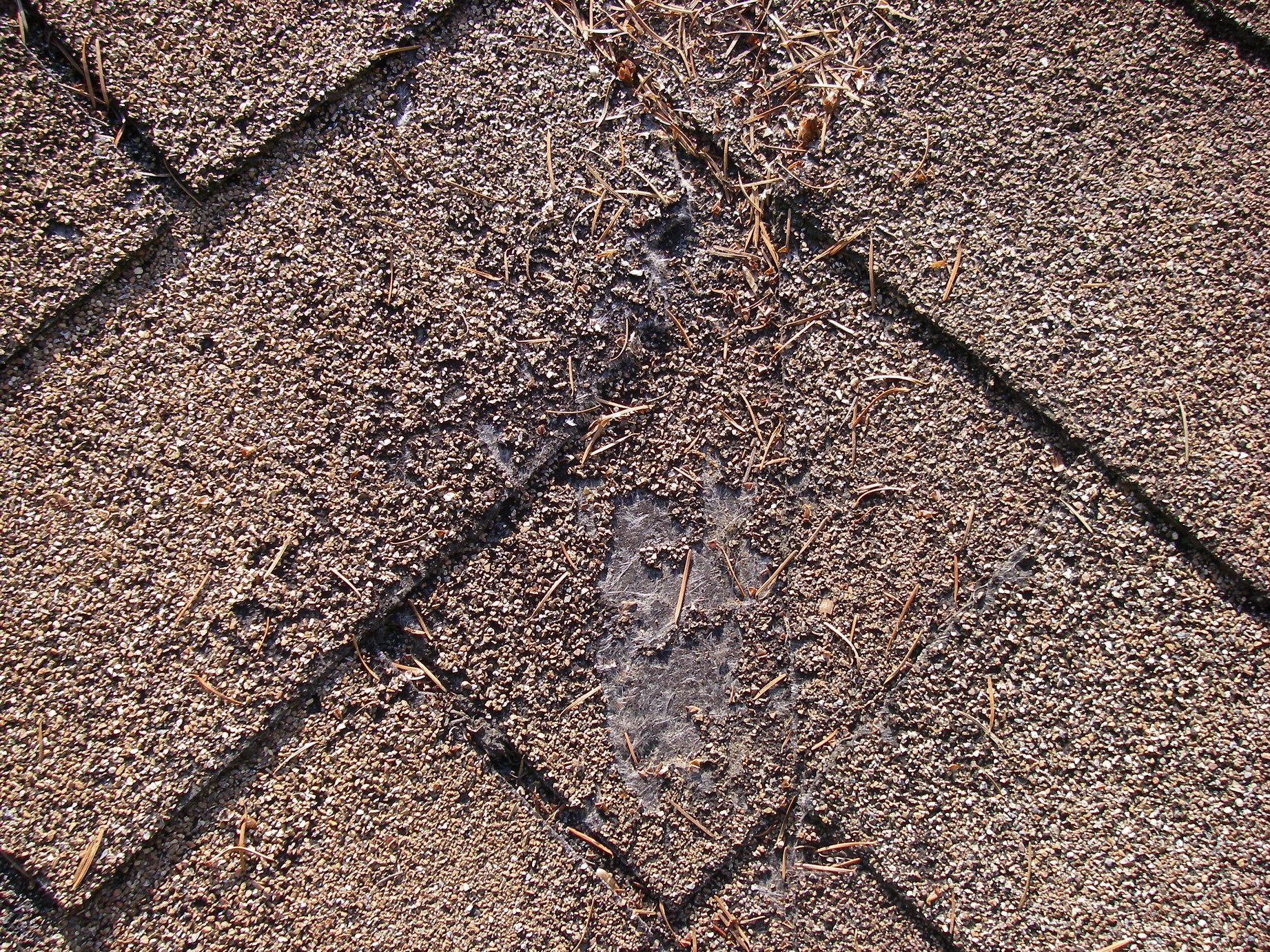 worn out position roof shingles centennial home inspection